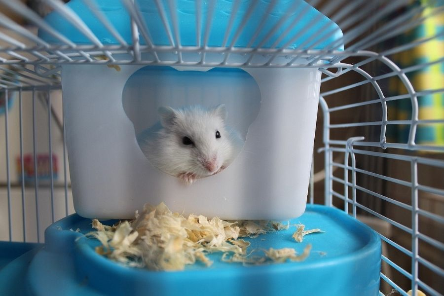 Choose the Right Hamster Cage