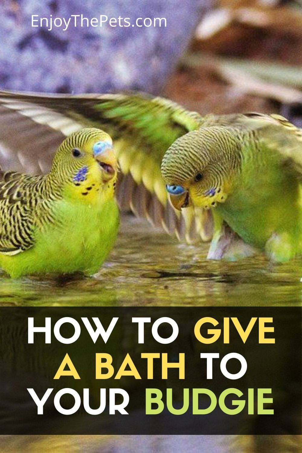 How to Give a Bath to Your Budgie