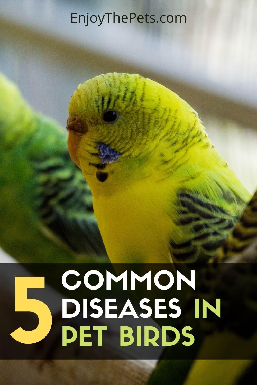 5 Common Diseases in Pet Birds
