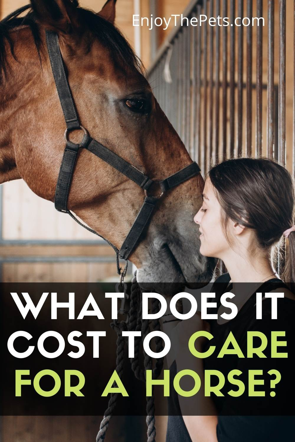 How does it Cost to Take Care of a Horse
