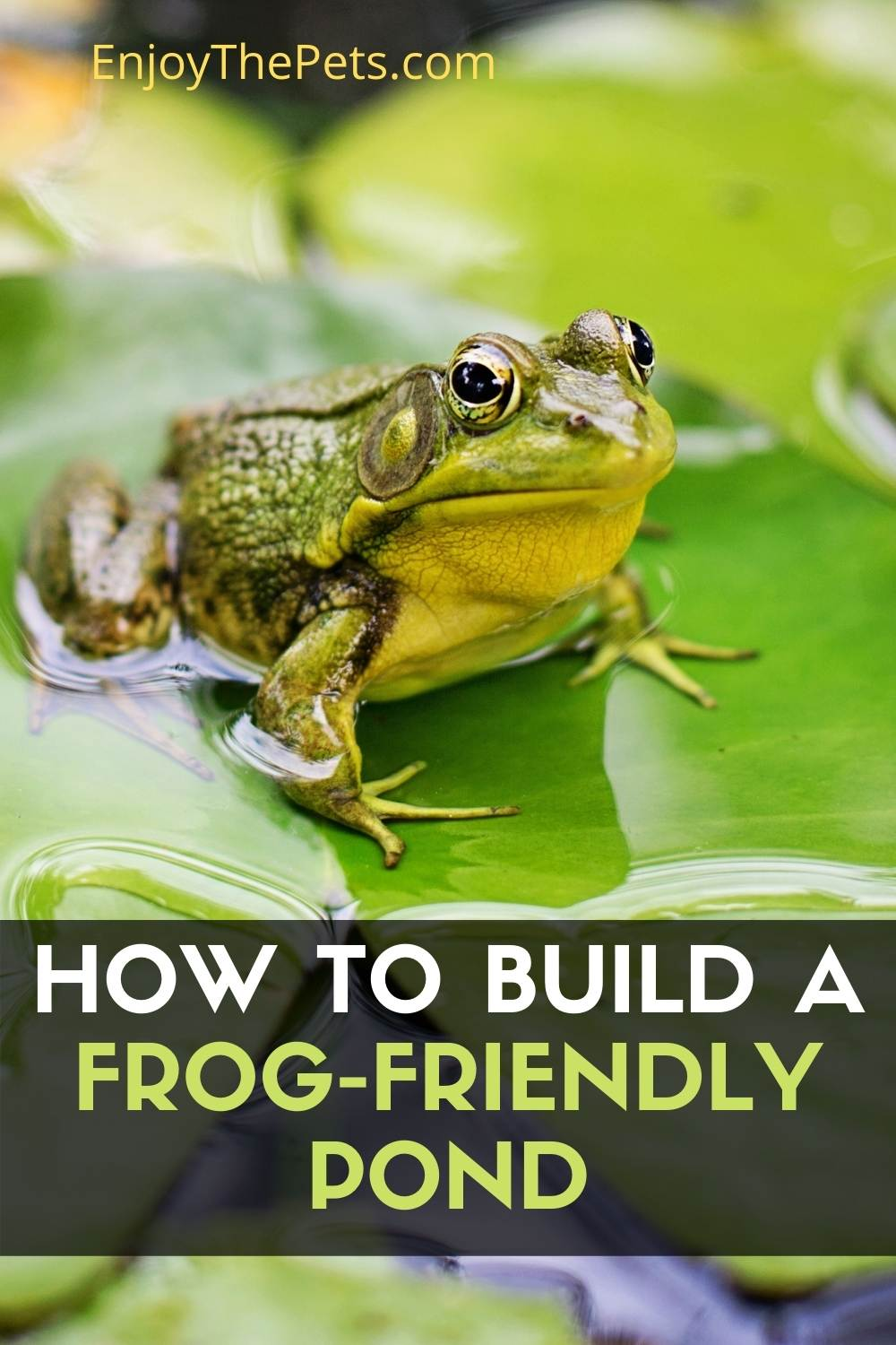 How to Build a Frog-Friendly Pond
