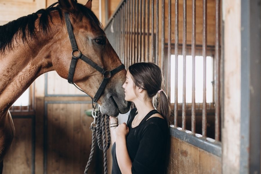 What Does it Cost to Care For a Horse