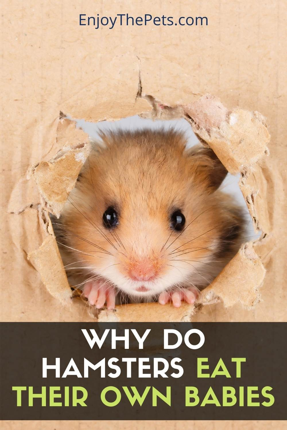 Why Do Hamsters Eat Their Own Babies