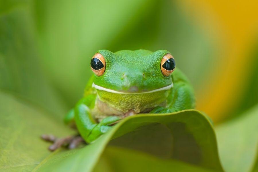 Best species of frog for beginners
