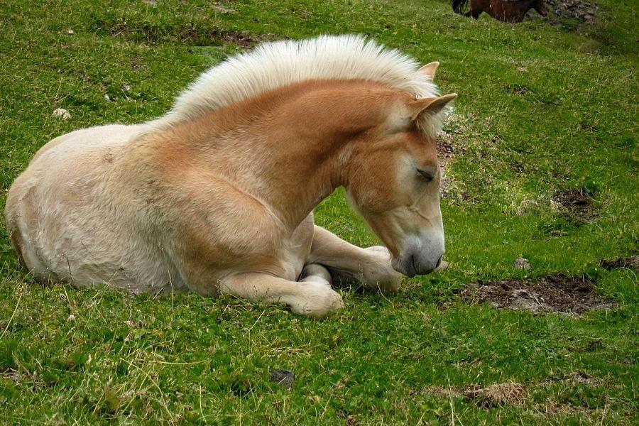 DO YOU KNOW HOW HORSES SLEEP_ 2