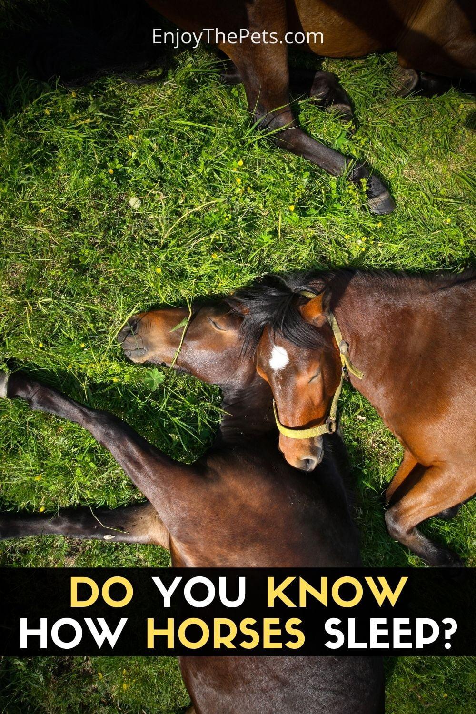 DO YOU KNOW HOW HORSES SLEEP_