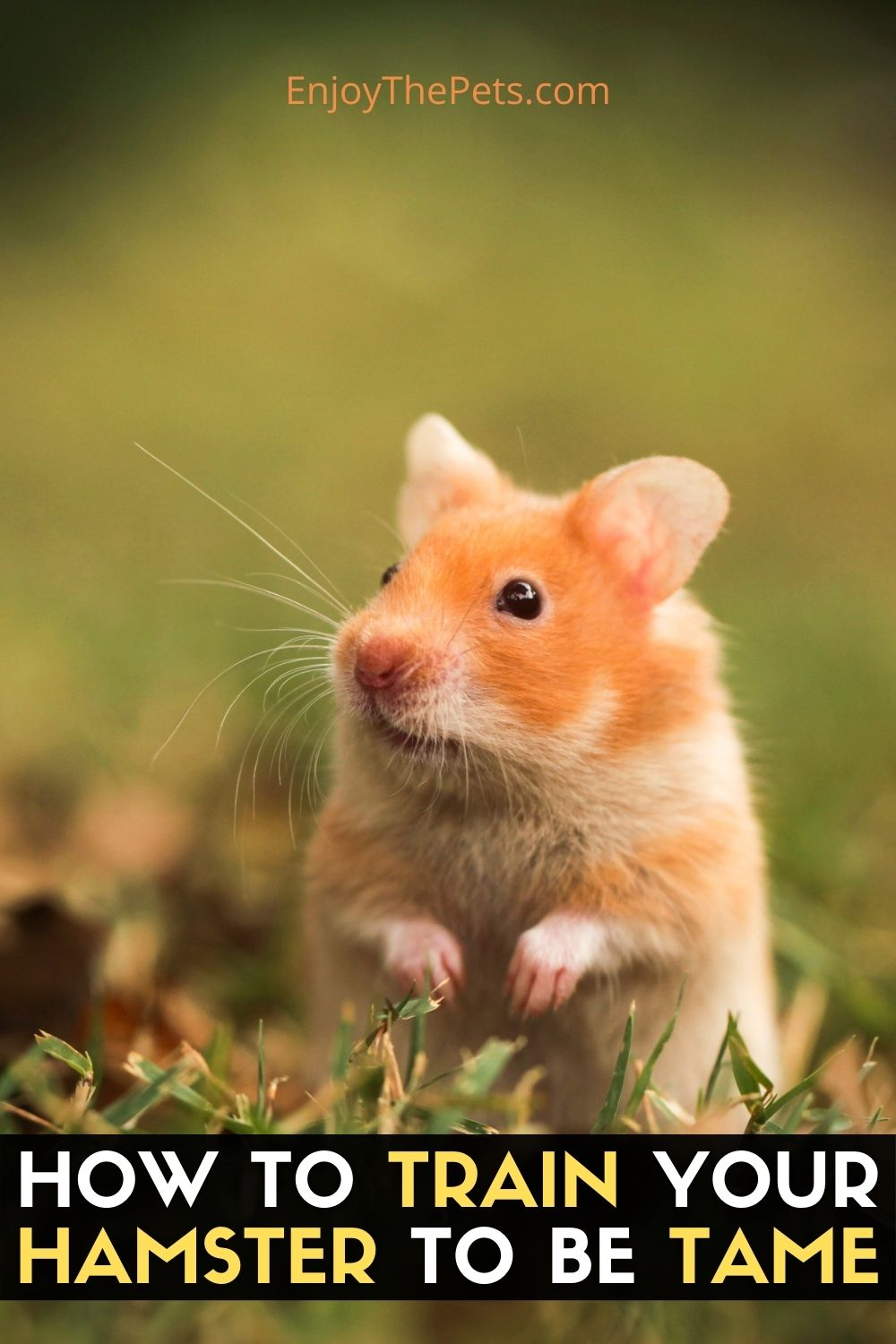 HOW TO TRAIN YOUR HAMSTER TO BE TAME 2