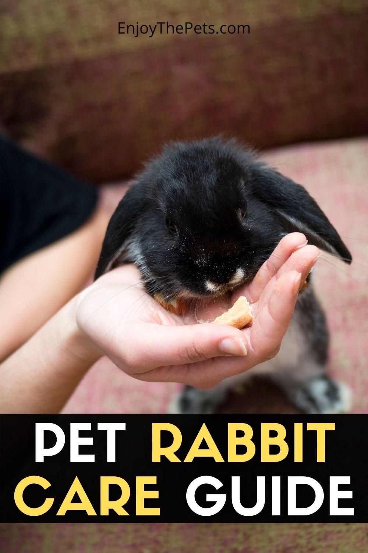 PET RABBIT CARE GUIDE 1