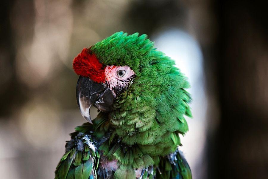 STRESS IN PET BIRDS