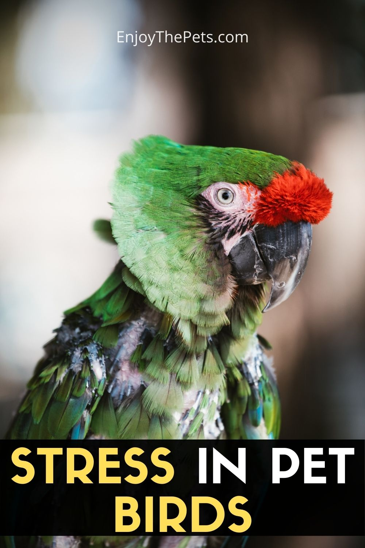 STRESS IN PET BIRDS 2