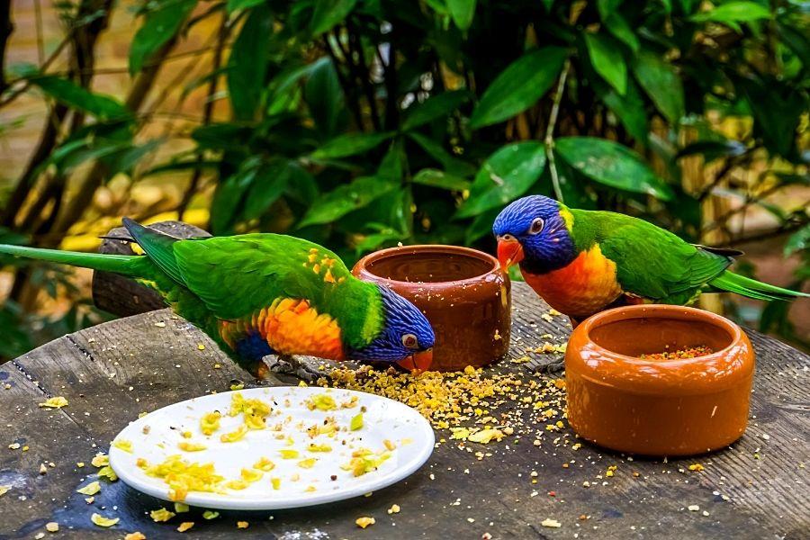 VITAMIN-RICH-FOODS-FOR-PET-BIRDS-2