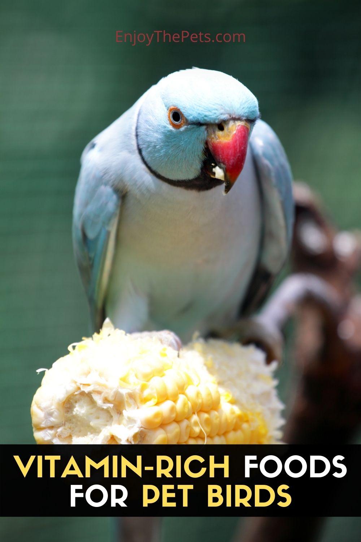VITAMIN-RICH-FOODS-FOR-PET-BIRDS-2 3