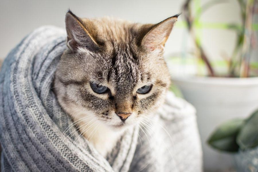 BENADRYL FOR CATS (1)