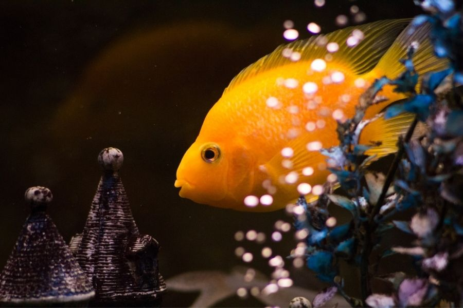 BUBBLES ON AQUARIUM WATER_ CAUSES AND CURES (1)