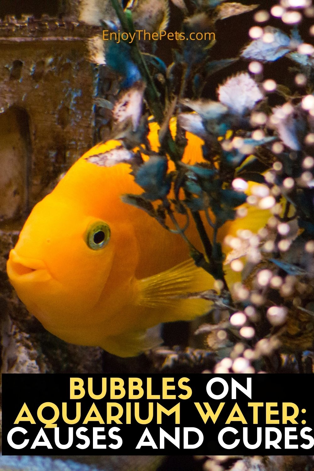 BUBBLES ON AQUARIUM WATER_ CAUSES AND CURES