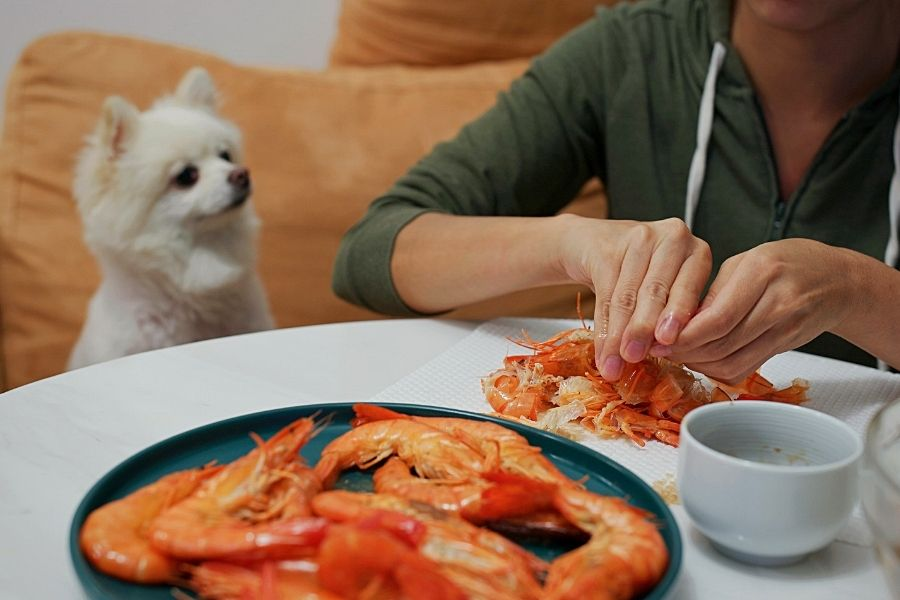 CAN DOG EAT SHRIMP_ (2)