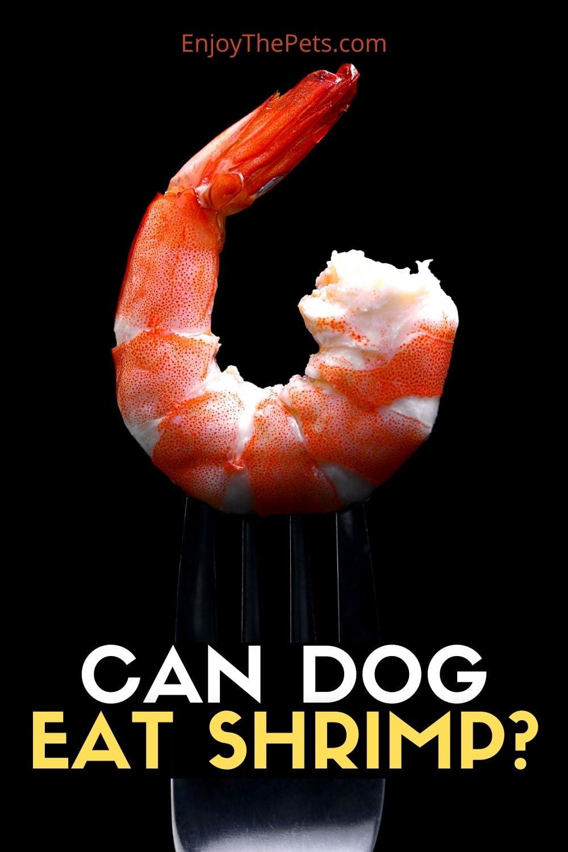 CAN DOG EAT SHRIMP_