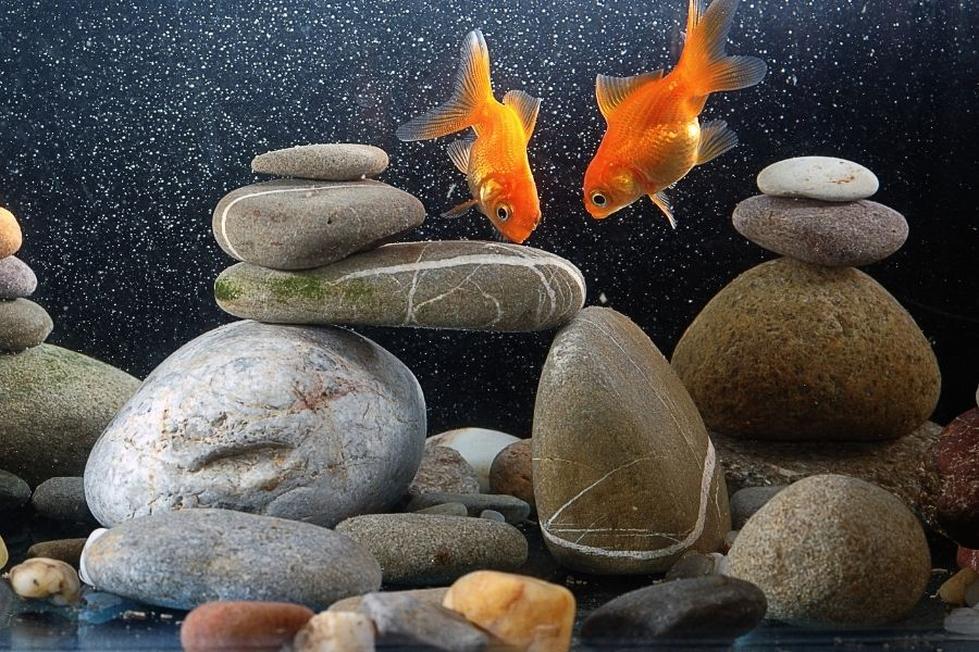 CAN I USE OUTDOOR GRAVEL OR ROCKS IN AN AQUARIUM_ (1)