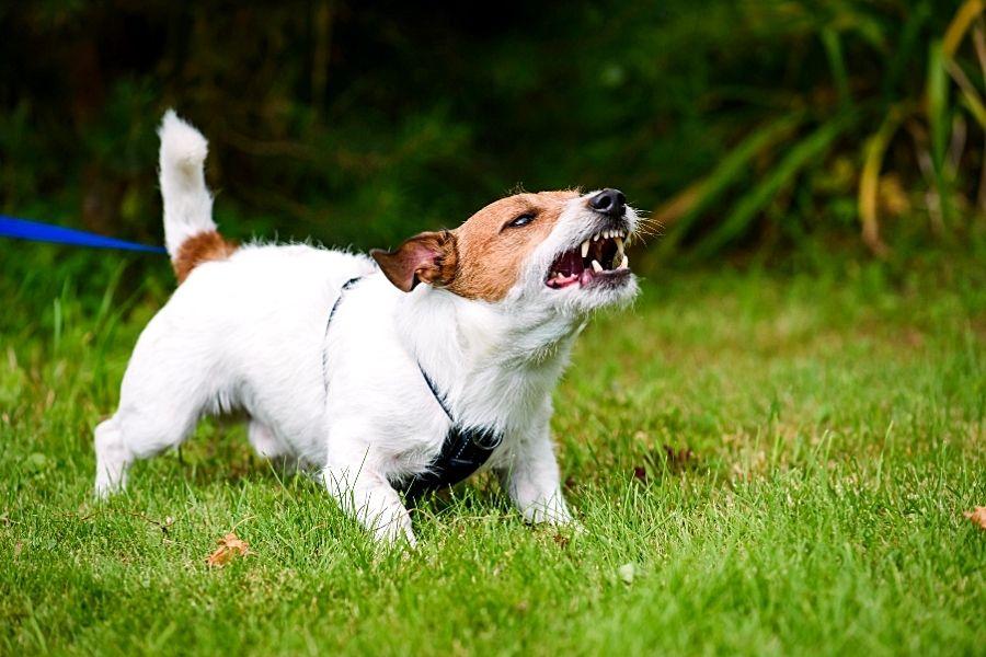 COMMON REASON FOR DOG BARKING (2)