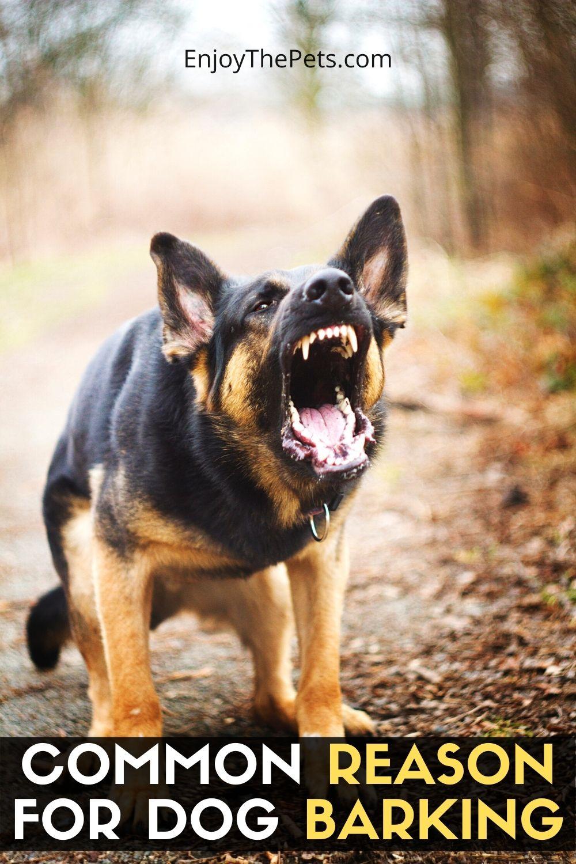COMMON REASON FOR DOG BARKING
