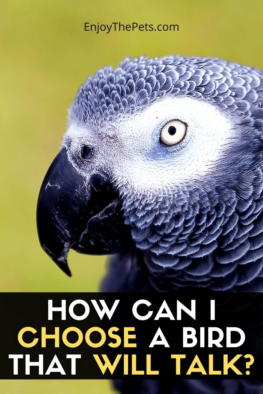 HOW CAN I CHOOSE A BIRD THAT WILL TALK? 5