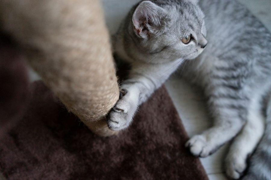 DESTRUCTIVE SCRATCHING IN CATS (1)