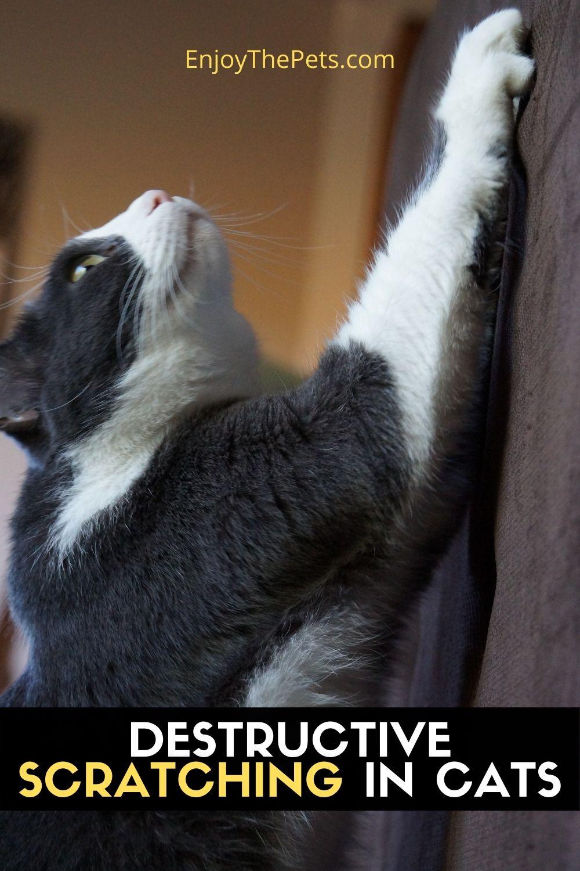 DESTRUCTIVE SCRATCHING IN CATS