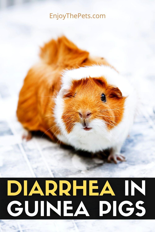 DIARRHEA IN GUINEA PIGS (3)