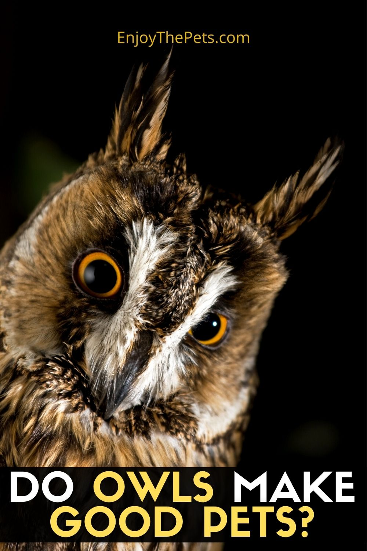DO OWLS MAKE GOOD PETS_