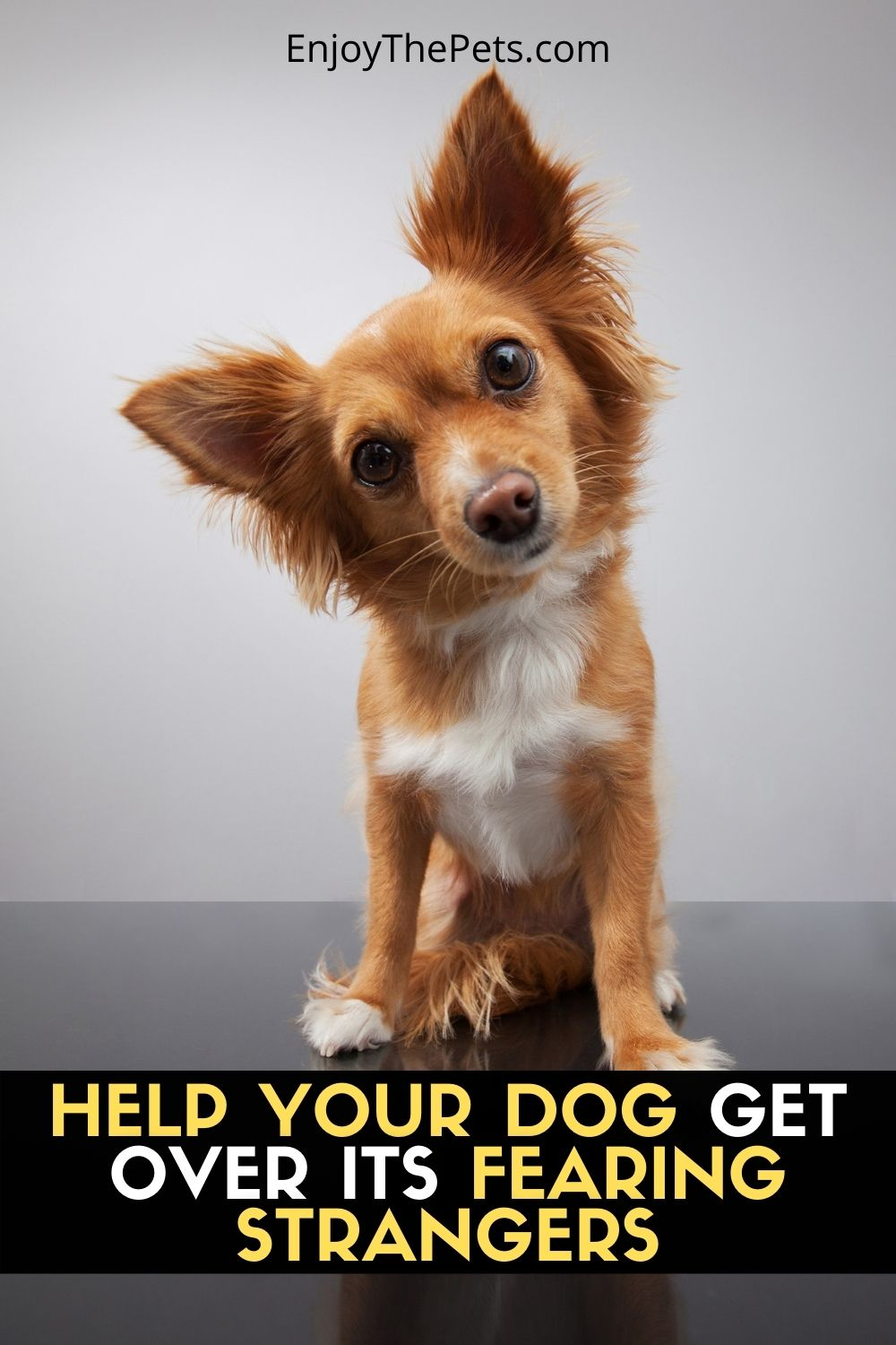 HELP YOUR DOG GET OVER ITS FEARING STRANGERS