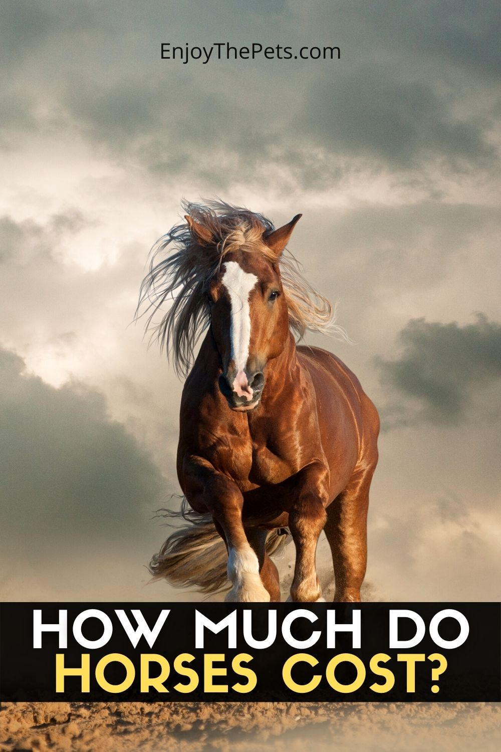 HOW MUCH DO HORSES COST_