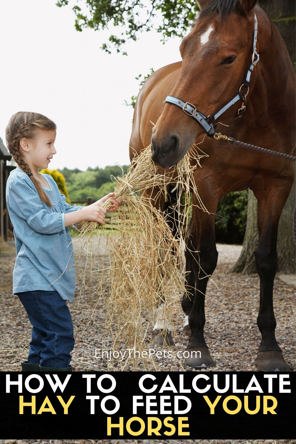 HOW TO CALCULATE HOW MUCH HAY TO FEED YOUR HORSE
