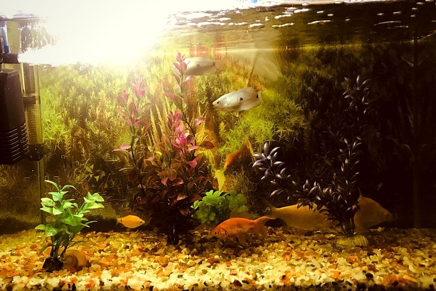 HOW TO QUICKLY REDUCE NITRATE IN A FISH TANK (2)