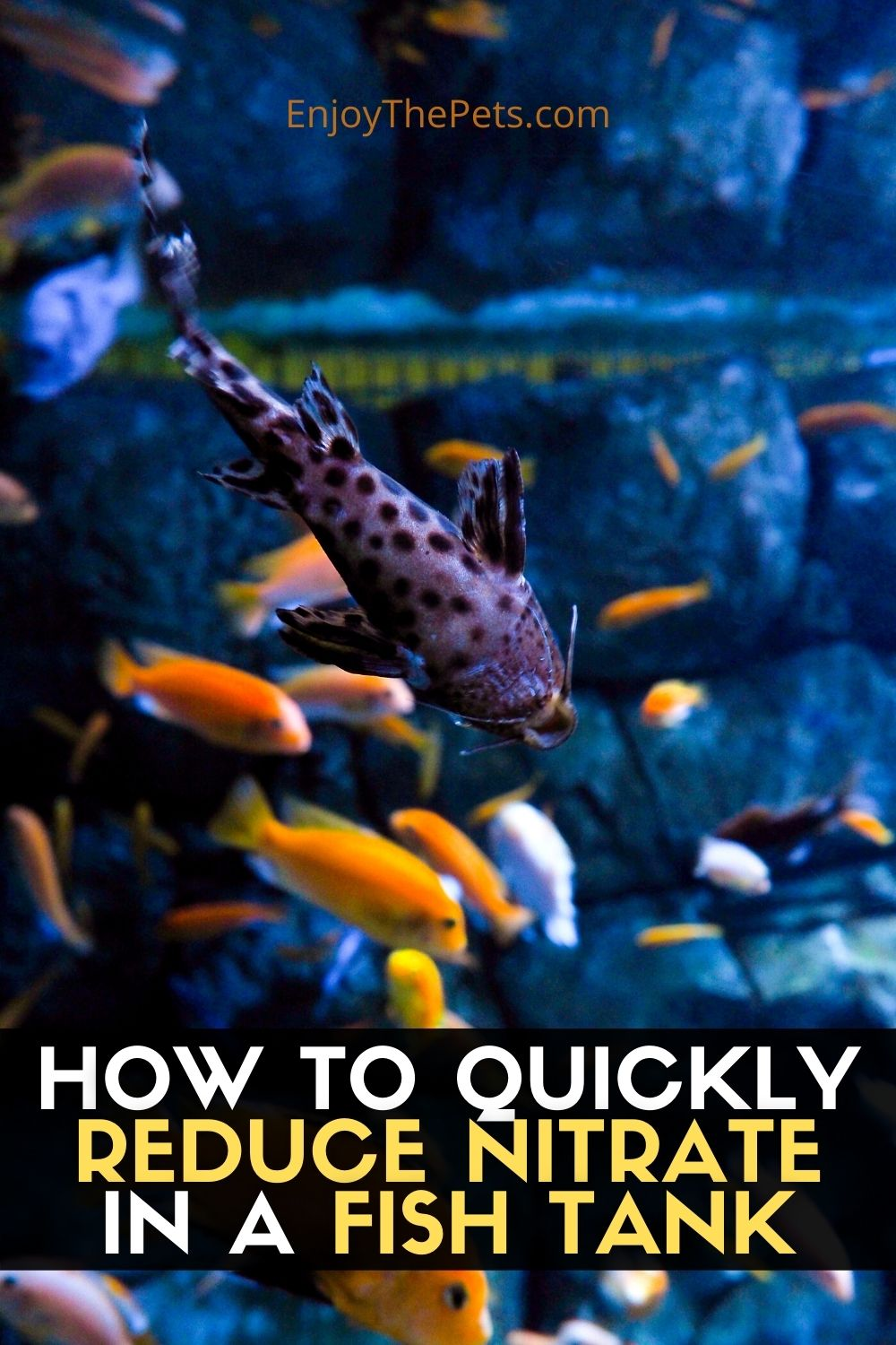 HOW TO QUICKLY REDUCE NITRATE IN A FISH TANK