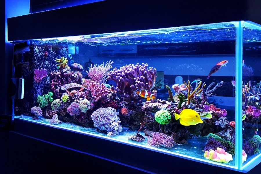 HOW TO SEED A NEW AQUARIUM (1)