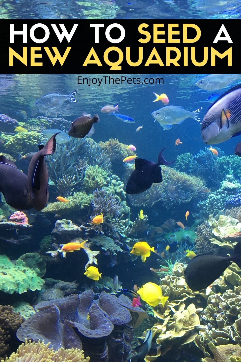 HOW TO SEED A NEW AQUARIUM