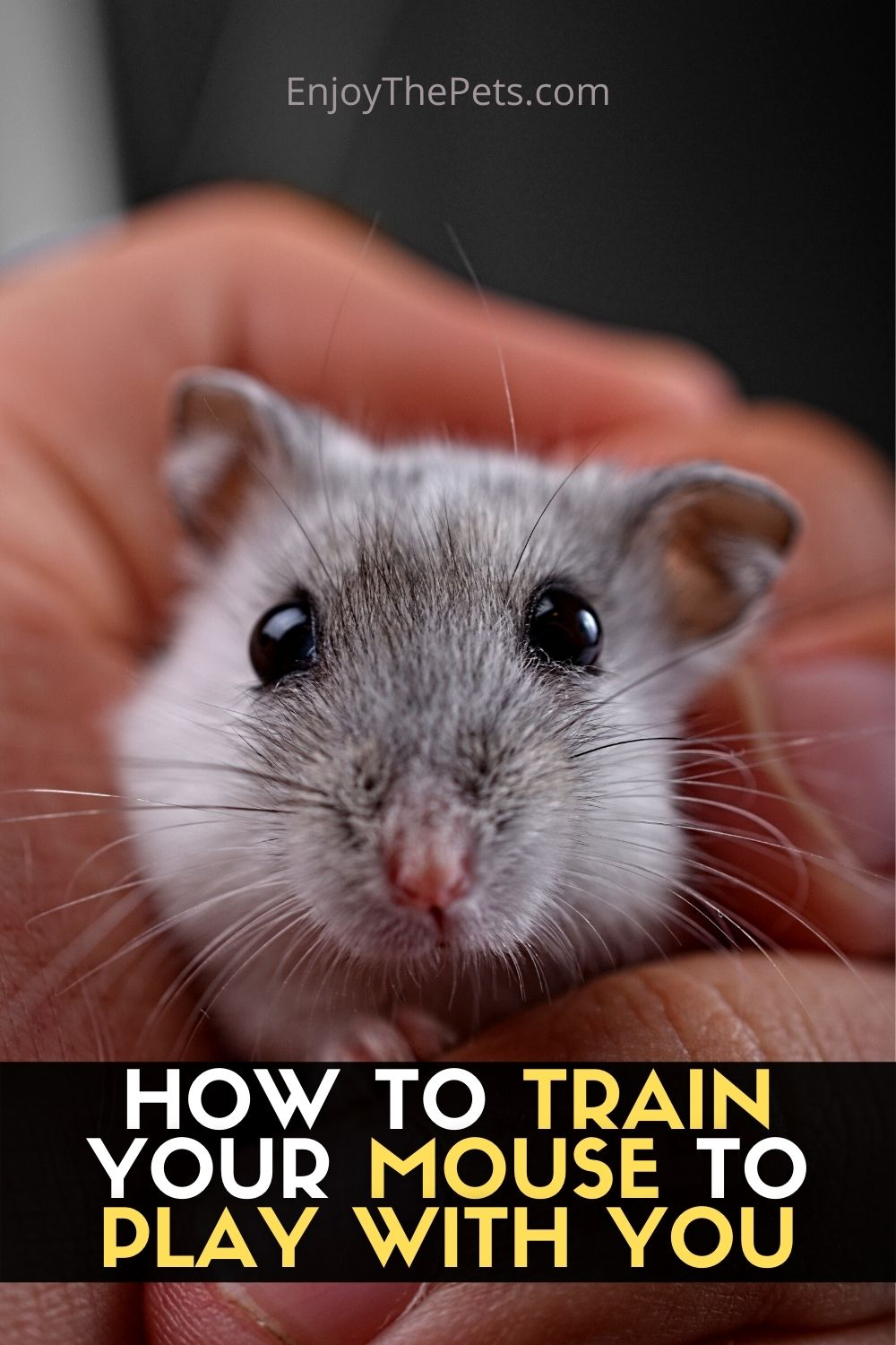 HOW TO TRAIN YOUR MOUSE TO PLAY WITH YOU