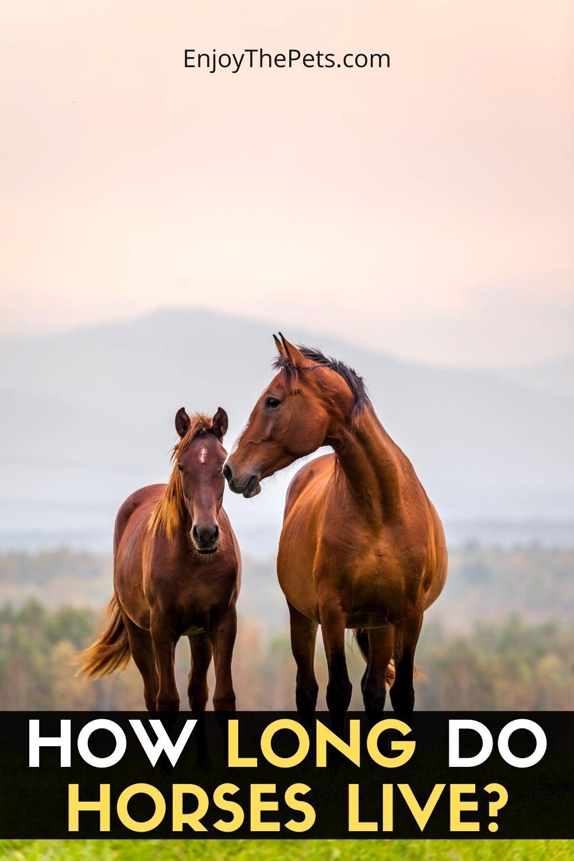 How Long Do Horses Live_