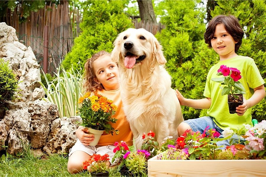 How to Train Your Dog to Handle a Toddler (2)