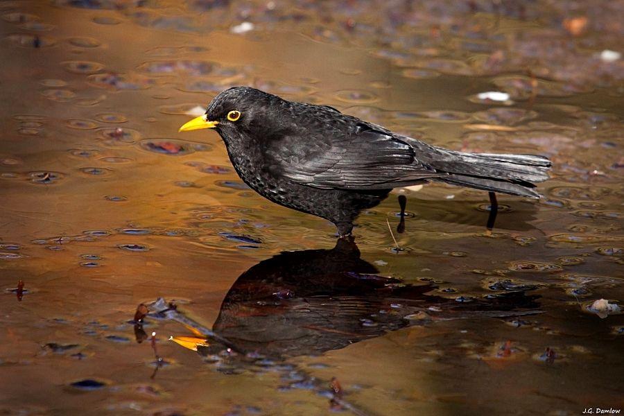 KEEPING WILD BIRDS AS PETS (2)