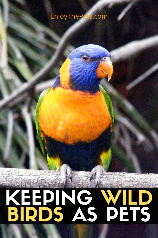 KEEPING WILD BIRDS AS PETS