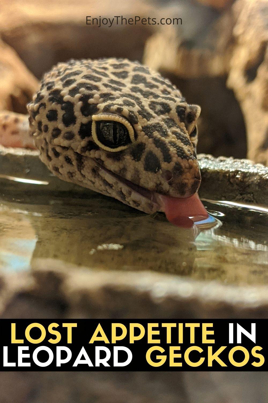 LOST APPETITE IN LEOPARD GECKOS
