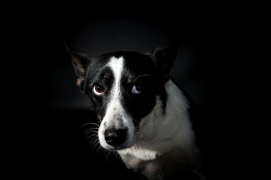 PNEUMONIA IN DOGS (2)