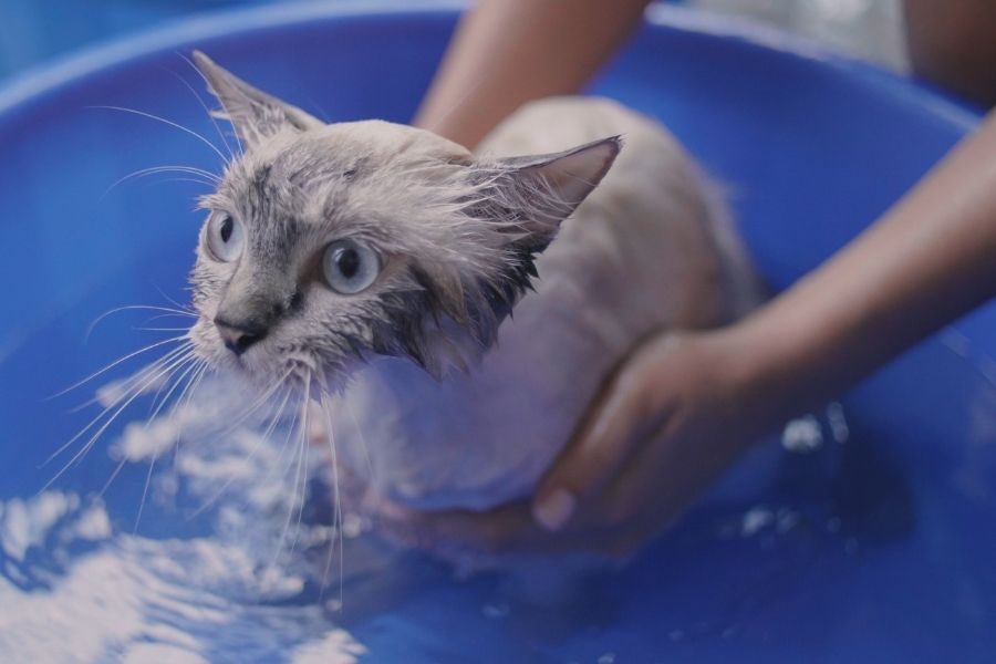 REASON WHY CATS HATE WATER (1)