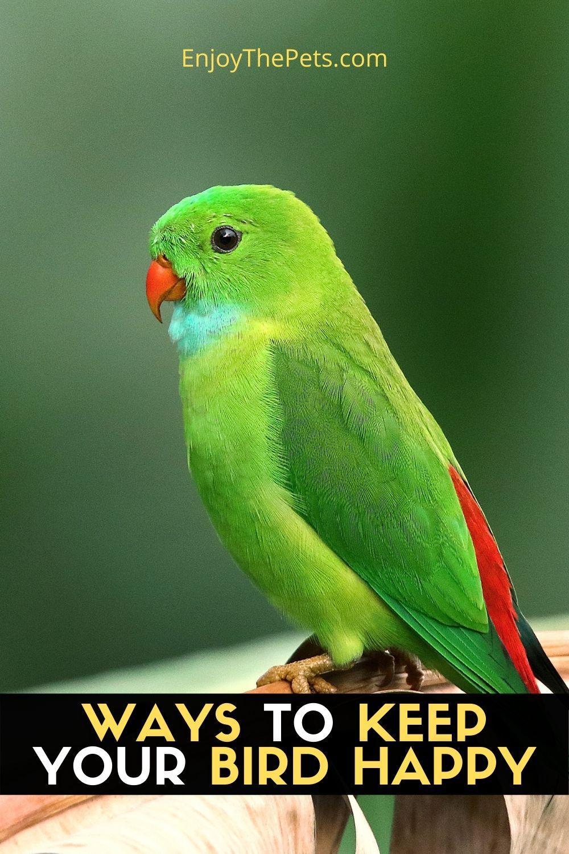 WAYS TO KEEP YOUR BIRD HAPPY