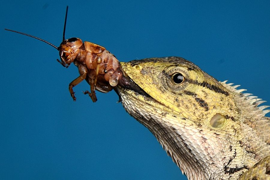WHAT FOOD DO REPTILES EAT? 3