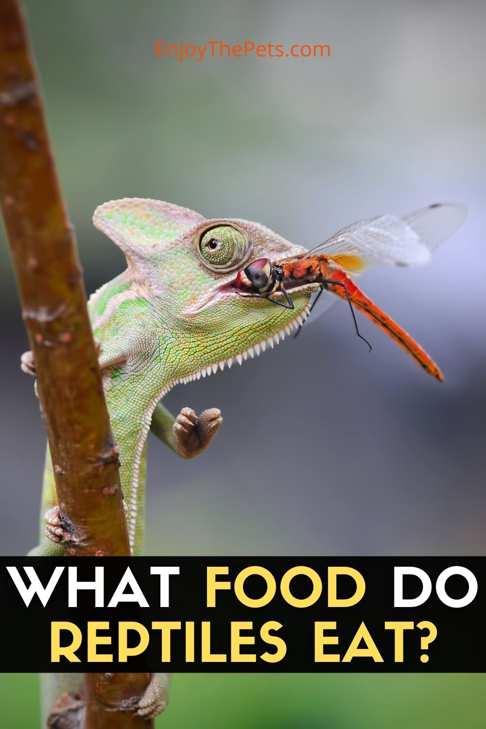 WHAT FOOD DO REPTILES EAT?