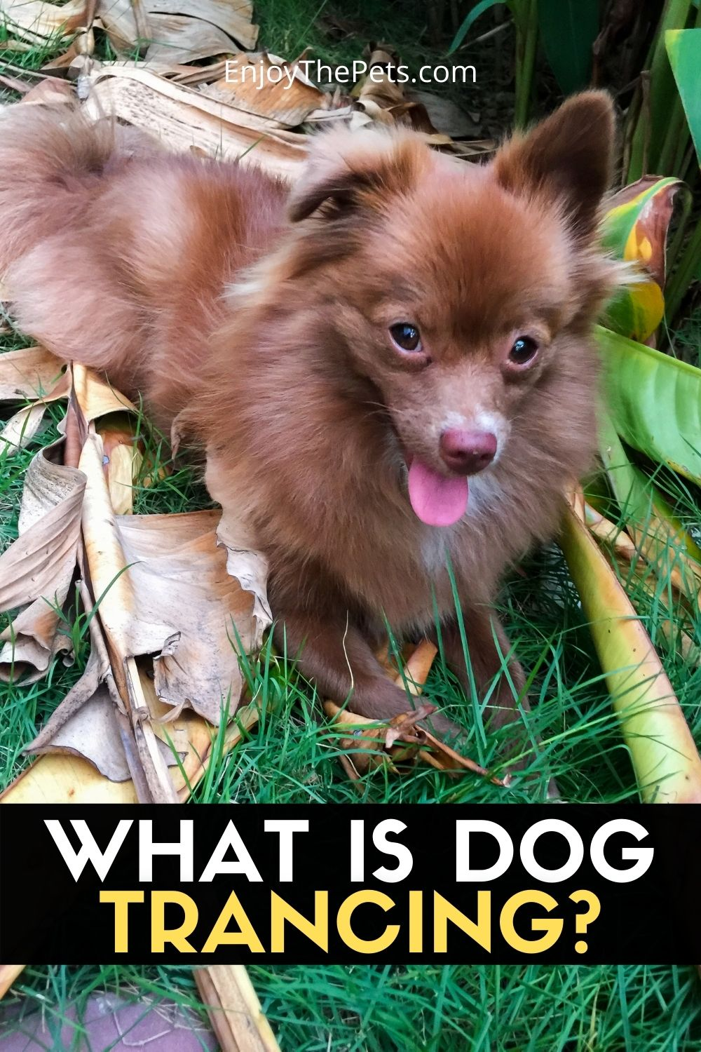 WHAT IS DOG TRANCING_