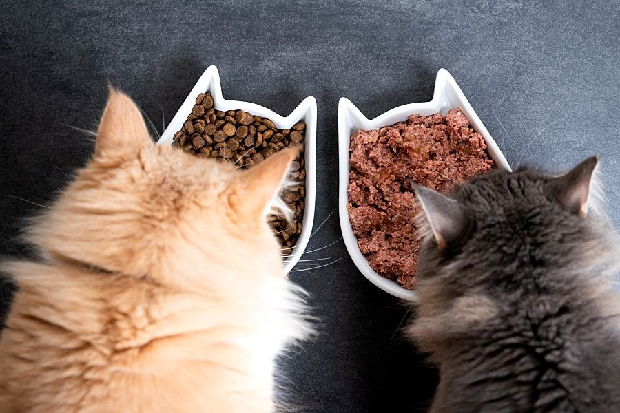 WHAT IS HUMAN GRADE CAT FOOD_ (2)