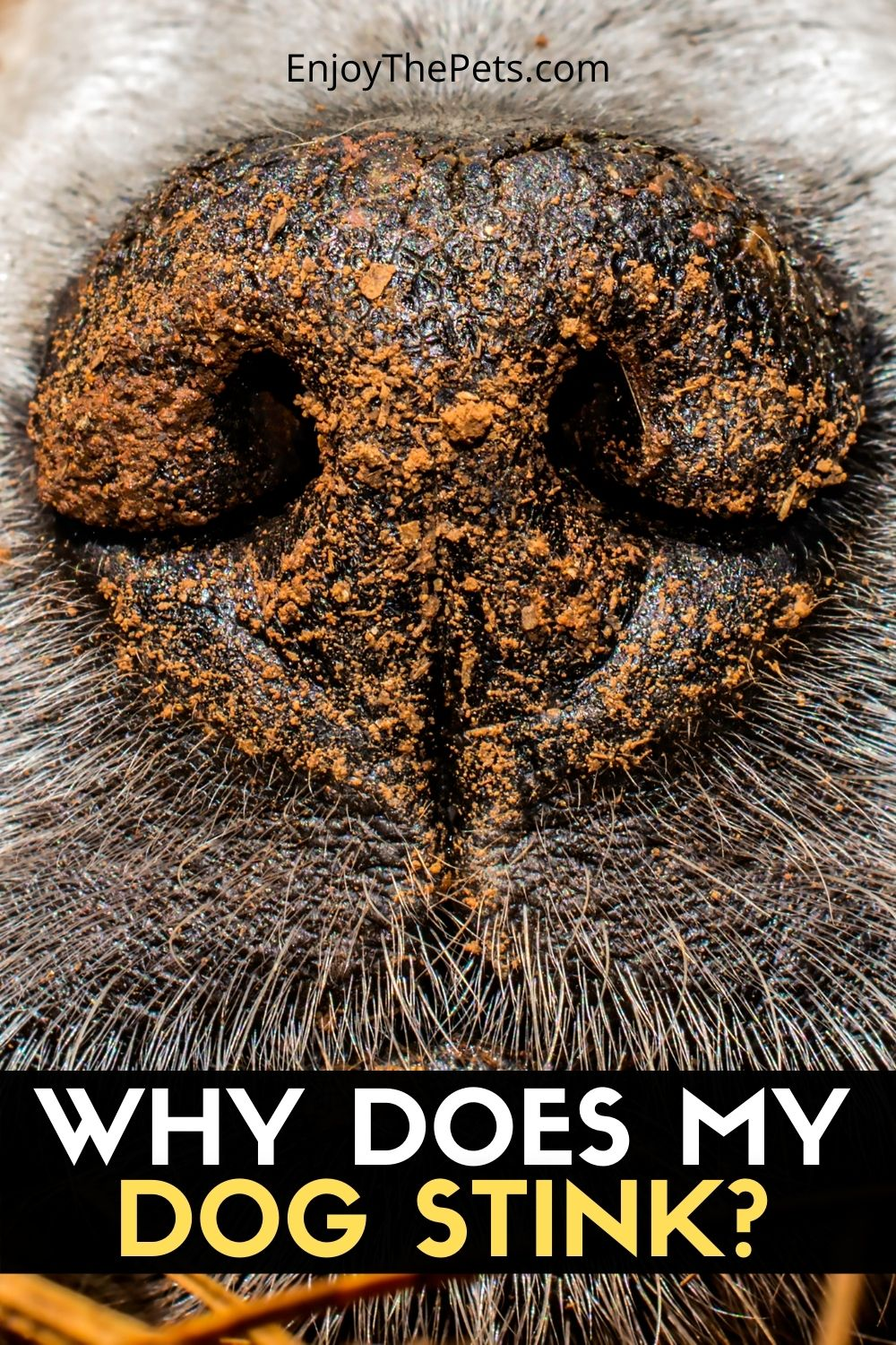 WHY DOES MY DOG STINK_